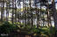 LOT 1500 Pacific Coast Hwy, Yachats, OR 97598 - Majestic tree line