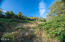 6005 Rowan Rd, Neskowin, OR 97149 - Trail up hillside