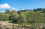 6005 Rowan Rd, Neskowin, OR 97149 - View of valley from upper meadow