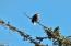 920 NW Highland Dr, Waldport, OR 97394 - Eagle Tree next door