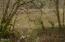 9.5 MILES EAST Alsea Hwy, Waldport, OR 97394 - DSC00241