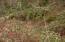 9.5 MILES EAST Alsea Hwy, Waldport, OR 97394 - DSC00249