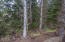 2396 SW Dune Ave, Lincoln City, OR 97367 - Back yard