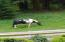 2038 Salmon River Hwy, Otis, OR 97368 - Horse