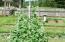 2120 S Crestline Dr, Waldport, OR 97394 - Waldport Garden Peas
