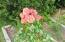 2120 S Crestline Dr, Waldport, OR 97394 - Waldport Roses (4) (1)