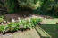 169 SE View Dr, Newport, OR 97365 - cala lilies