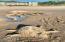 115 N Miller St, 202, WEEK J, Rockaway Beach, OR 97136 - Sand Sculptures