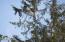 1300 SE Rio Vista Ln, Newport, OR 97365 - Wildlife from Deck