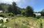56 Greenhill Dr, Yachats, OR 97498 - Back yard with many fruit trees