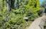 2695 SW Breakers Dr, Waldport, OR 97394 - Outdoor Cat Garden