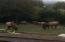 3021 N Bayview Rd, Waldport, OR 97394 - Elk off deck