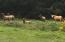3021 N Bayview Rd, Waldport, OR 97394 - Elk with horse
