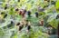 1266 N Yachats River Rd, Yachats, OR 97498 - Organic Berries