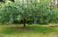 9466 Yachats River Rd, Yachats, OR 97498 - Apple Trees