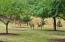 9466 Yachats River Rd, Yachats, OR 97498 - Deer