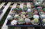 9724 Yachats River Rd, Yachats, OR 97498 - Assortment of Cacti