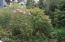 319 NW 26th St, Newport, OR 97365 - Natural landscaping