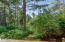 9414 SE Cedar St, South Beach, OR 97366 - Forested Back Yard