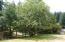 221 Wright Creek Rd, Toledo, OR 97391 - Apple tree