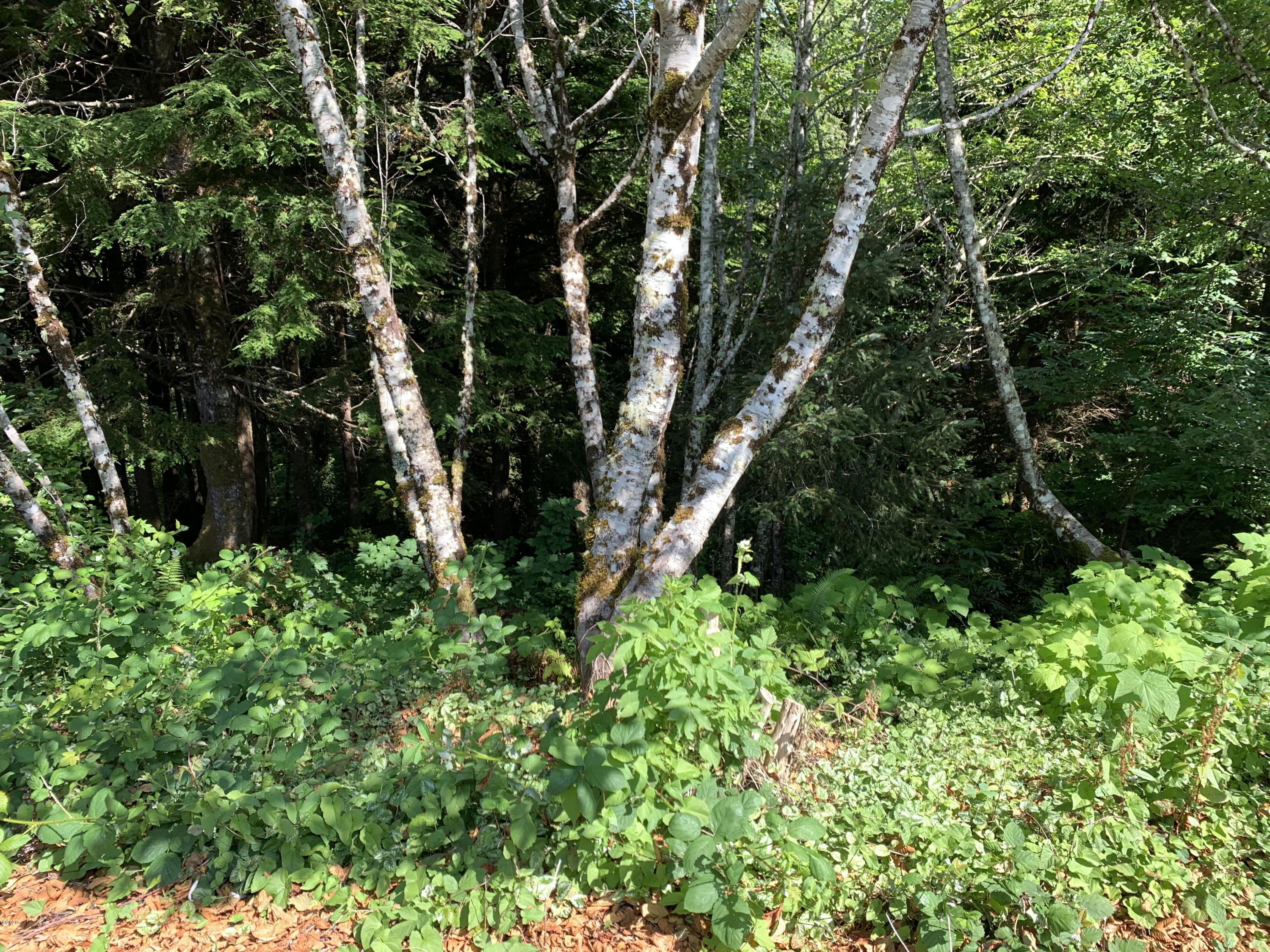 TL 1800 Ne Shore Pine Ct, Newport, OR 97365 - View of Property from Street