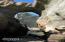 1 Woodthrush Ln, Gleneden Beach, OR 97388 - Ocean Wonders