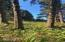 31 Surfside, Yachats, OR 97498 - View from back of lot