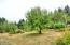 52 E Rainbow Rd, Waldport, OR 97394 - Fig Trees