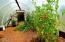 52 E Rainbow Rd, Waldport, OR 97394 - Garden Area South Lawn