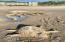 115 N. Miller St., 102, Rockaway Beach, OR 97136 - Fun in the sand
