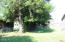 480 W Buford Ave, Siletz, OR 97380 - west side grove of trees