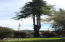 480 W Buford Ave, Siletz, OR 97380 - mature tree at street