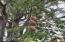 331 E Logsden Rd, Siletz, OR 97380-9617 - May be 100yrs