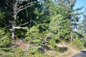 2506 NW Mokmak Lake Dr, Waldport, OR 97394 - Edge of lot by street