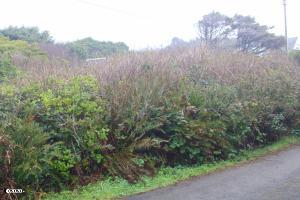 TL 1300 NW North Ave, Yachats, OR 97498 - Lot from North St