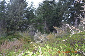 LCM # 13s11w07 Sw Hidden Lake Drive, Waldport, OR 97394 - Lot Picture