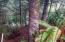 491 Spruceburl Ln, Gleneden Beach, OR 97388 - 491 Spruceburl Ln
