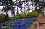 893 NW Highland Dr, Waldport, OR 97394 - Back yard