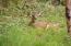 534 SE 2nd St, Toledo, OR 97391 - Back yard visitor
