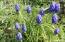 97 N Deer Valley Rd, Otis, OR 97368 - Flowers