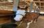 199 N Wolkau Rd, Seal Rock, OR 97376 - Horse Tenant