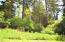 6920 NE Park Lane, Otis, OR 97368 - Forested back yard (2)