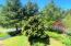 46615 Terrace Dr, Neskowin, OR 97149 - Front Yard