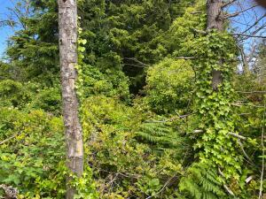 LOT 2300 3rd St, Otter Rock, OR 97369 - Lot in Otter Rock