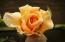22 Catkin Loop, Yachats, OR 97498 - Patio Rose 22 Catkin Lp.