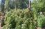 648 Olalla Rd, Toledo, OR 97391 - Loganberries