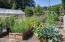 648 Olalla Rd, Toledo, OR 97391 - Garden