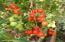 648 Olalla Rd, Toledo, OR 97391 - Grow Tomatoes