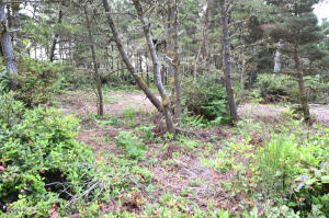 TL2500 US-101, Seal Rock, OR 97376 - Partially cleared lot