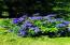 3204 N Bayview Rd, Waldport, OR 97394 - Blue berries